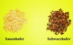 Hafer - Schwarzhafer  (Avena sativa) - 1 kg
